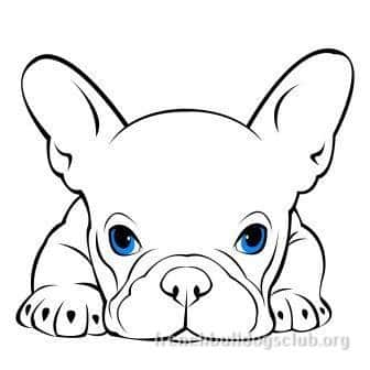 how to clean French Bulldog eyes