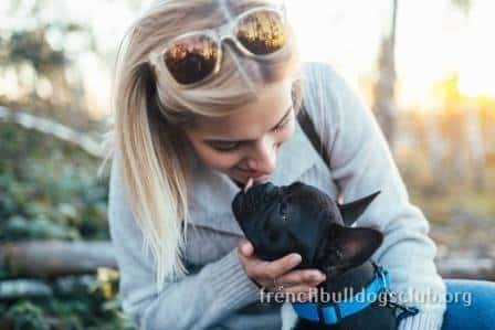 how to train a french bulldog