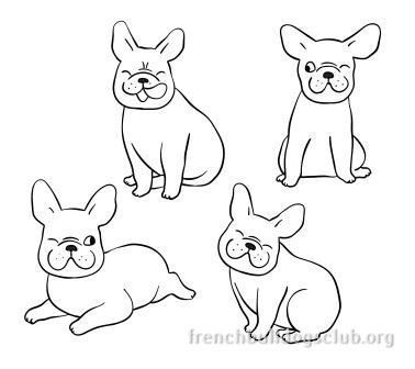 french bulldogs biting