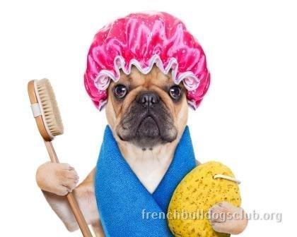 French Bulldog taking a bath guide