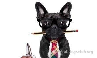 Best Dental Chews For French Bulldogs