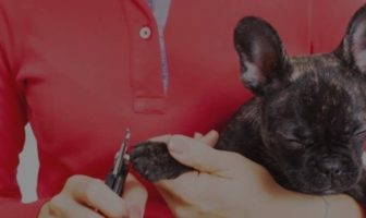 French Bulldog Nails – How to cut them stress-free!