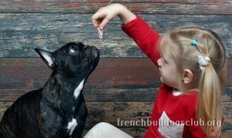best automatic treat dispenser French Bulldog