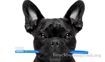 best dental care kit French Bulldog dog