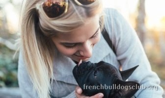 Best dental spray French Bulldog dog