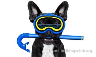best dog pools French Bulldog
