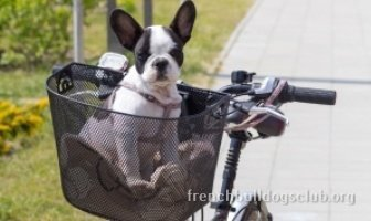 best dog stroller French Bulldog