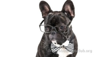 Best Eyes Wipes For French Bulldogs