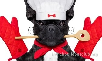 best food adult French Bulldog dog