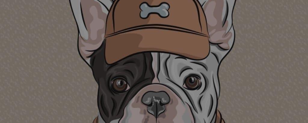 french bulldog skin problems
