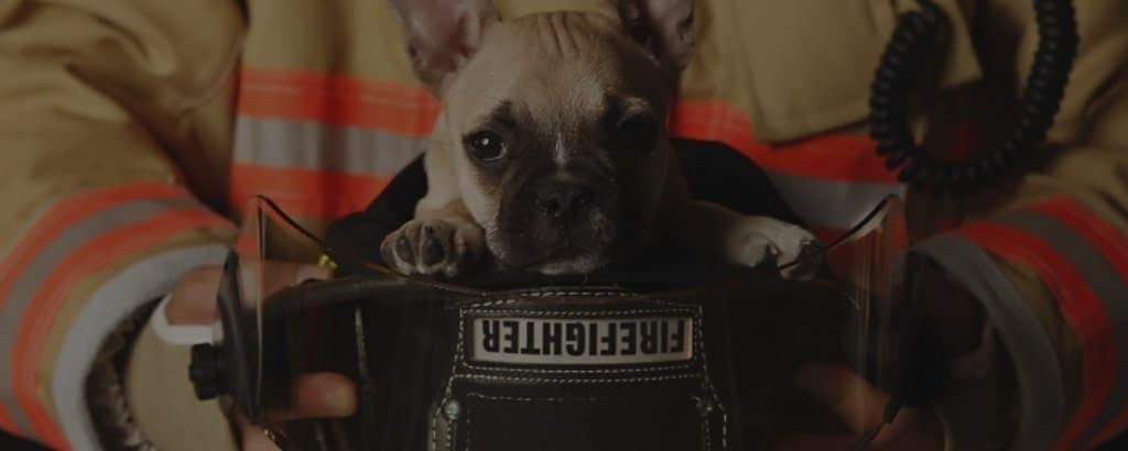french bulldogs for rescue