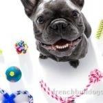best rope tug toy French Bulldog dog