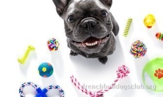 best rope toy French Bulldog dog
