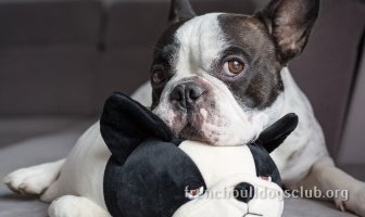 best separation anxiety toy French Bulldog dog
