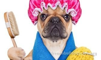 best shampoo French Bulldog