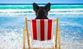 best sunscreens French Bulldog dog