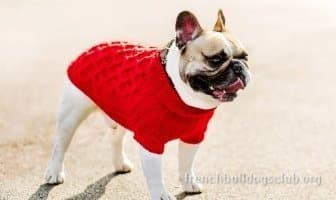 sweaters for french bulldogs