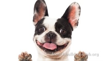 Best Toothpastes For French Bulldogs